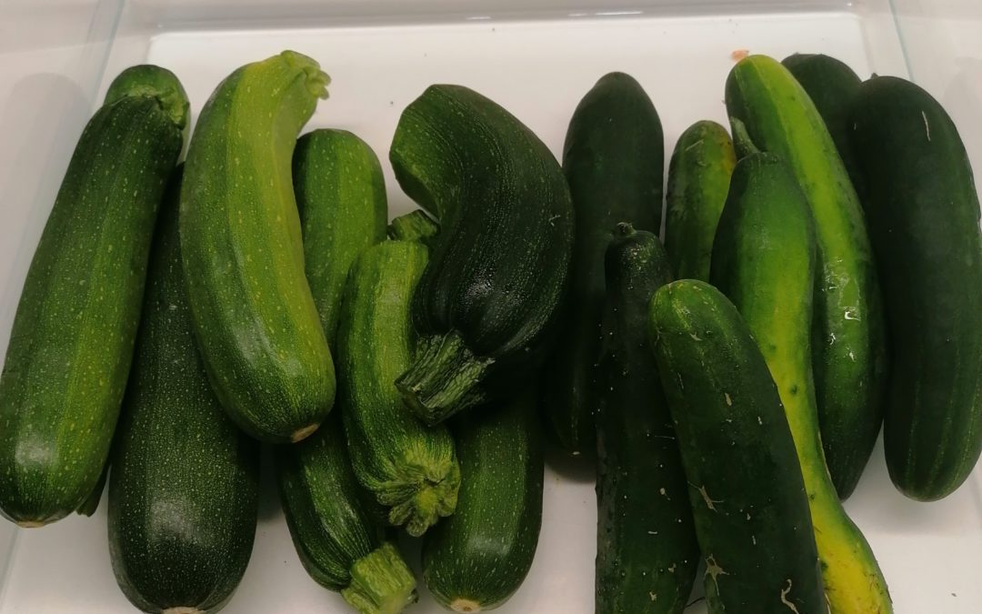 Hochbeet ernten & Gemüse einwecken